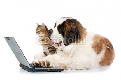 Saint_bernard_puppy_with_tabby_cat_in_front_of_a_laptop.jpg